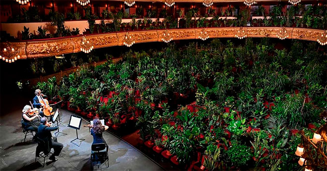 Dünyada Bir İlk: İspanya'da 'Bitkilere' Konser