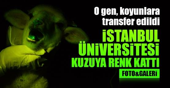 Üniversite Kuzuya Renk Kattı