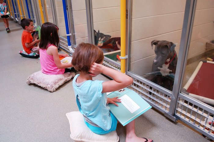 Bu Çocuklar Sahipsiz Köpeklere Kitap Okuyarak Hiç Tahmin Etmediğimiz Bir Fayda Sağlıyorlar