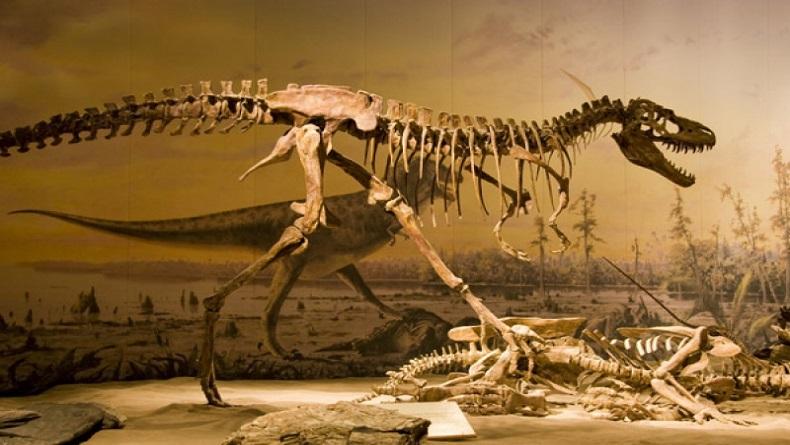 İrlanda'da Araştırmacılar Fosillerin İncelenmesinde Yeni Bir Yöntem Keşfetti!