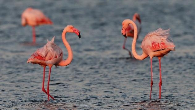Öğrenci Kariyeri - : Doğa Harikası: İzmir Kuş Cenneti