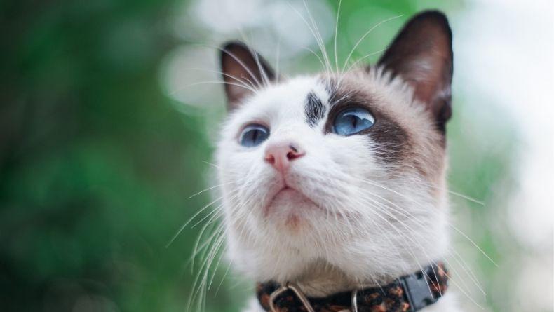 Kediler Hakkında Az Bilinen 8 İlginç Bilgi