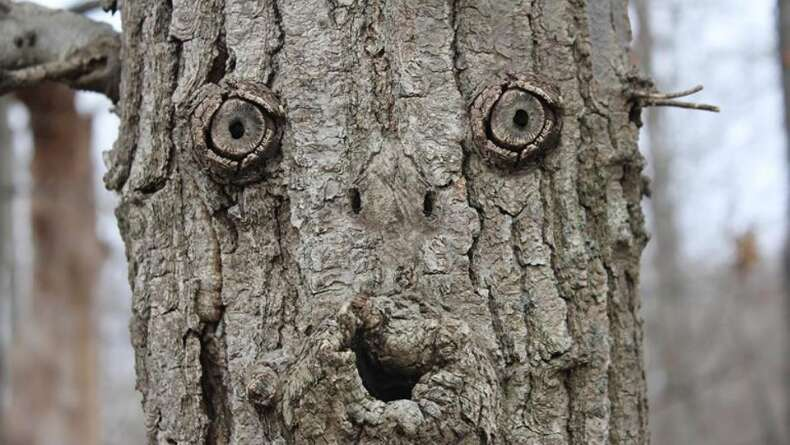 Ağaçta Bir Yüz Görüyorsanız Pareidolia Etkisi Olasılığınız Yüksek