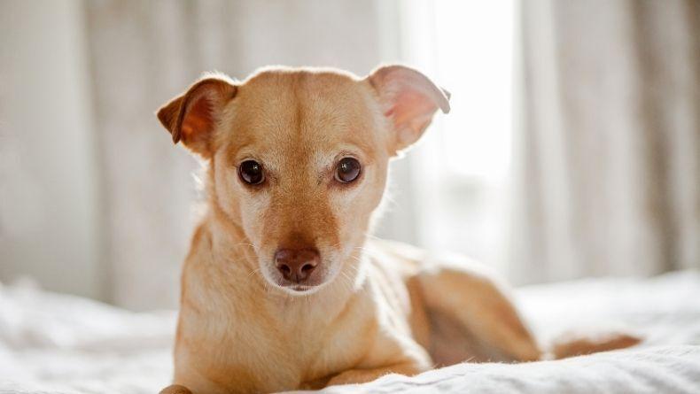 Sevimli Dostlarımız Köpekler Hakkında 5 İlginç Bilgi