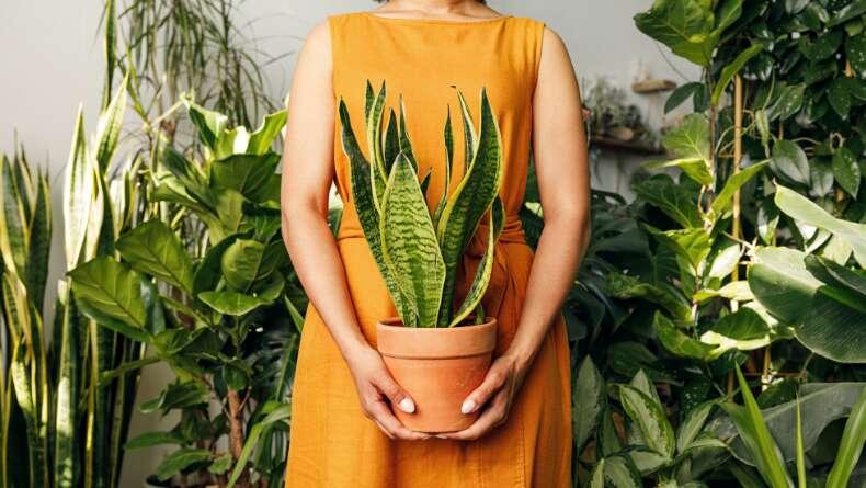 Doğamızın Oksijenlerini Sağlayan Bitkiler: Onlar da Kanser Oluyor mu?