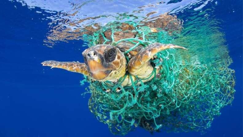 Plastik Atıklara Yeni Çözüm: Gıdaya Dönüştürme