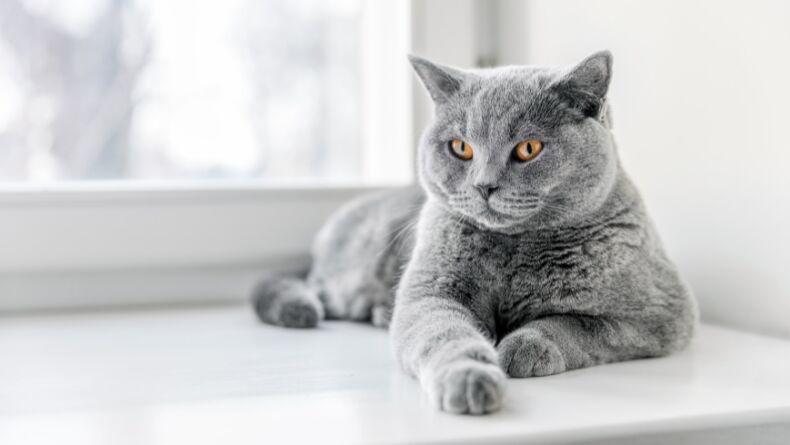 Neden Tüm Kediler Farklı Desenlere Sahiptir?