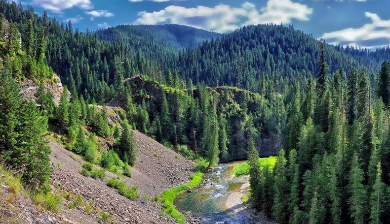 TEMA Vakfı'ndan Sağlık Çalışanları Hatıra Ormanı