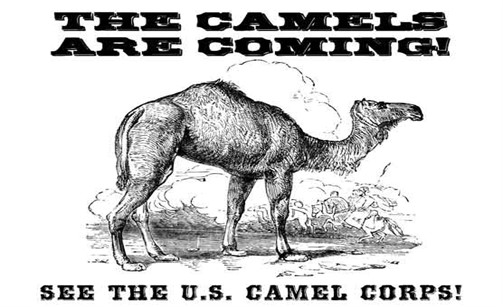Douglas-the-Camel-Event-Poster-Legal_503x307
