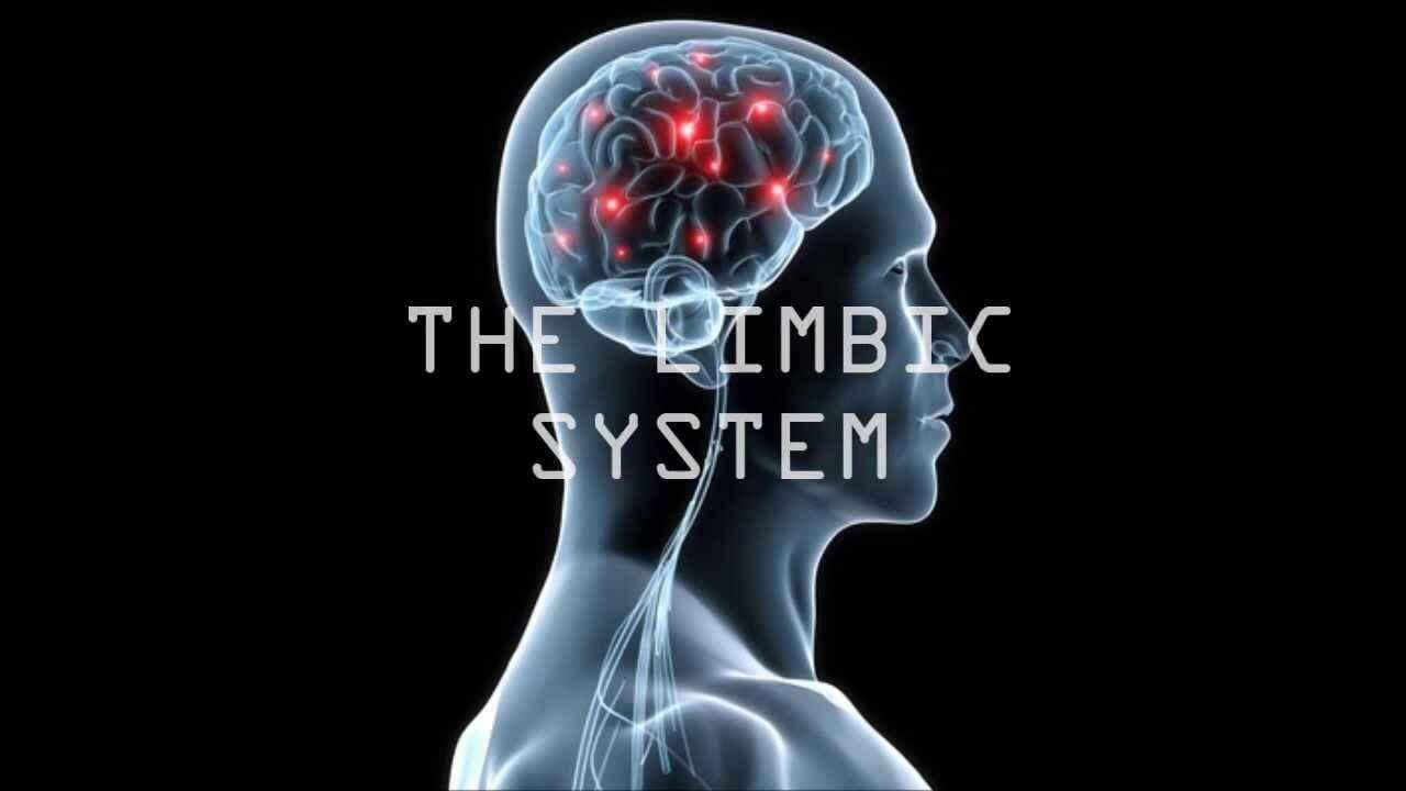 Beynimizde Neler Oluyor: Limbik Sistem #2